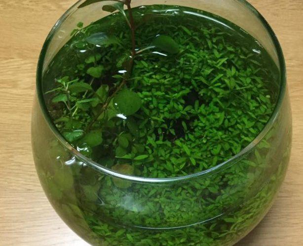 たった二つのコツで出来るボトルアクアリウム 緑のある空間で癒しを