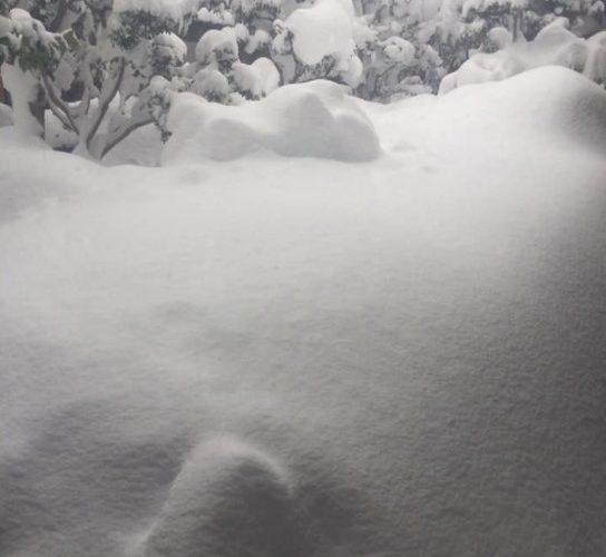 ダイエット218日目 大雪なのでおうちでゆっくり